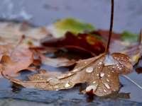 MARAMUREȘ - Nu scăpăm de ploi. Aflați prognoza pe două săptămâni