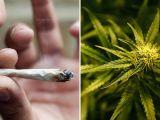MARAMUREȘ - Patru tineri bănuiţi că au consumat cannabis