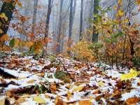 MARAMUREȘ: Ploi însemnate cantitativ, răcire a vremii și ninsori, de luni seară până joi seară