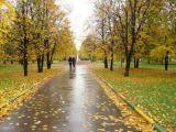 MARAMUREȘ: Ploi și răcire a vremii în următoarele două săptămâni