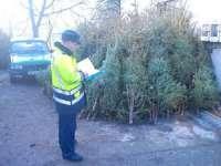 MARAMUREȘ: Pomi de Crăciun confiscaţi de poliţişti