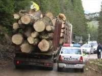 MARAMUREȘ: Transporturi ilegale de material lemnos sancţionate de poliţişti