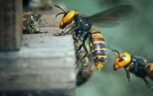 MARAMUREȘ: Un bărbat a decedat după ce a fost înțepat de viespe
