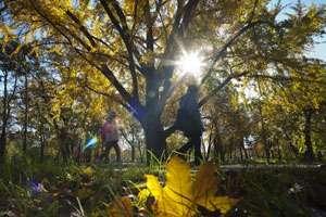 MARAMUREȘ: Vreme caldă cu valori maxime de 18 grade Celsius, în intervalul 3-16 noiembrie
