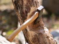 Maramureșean cercetat pentru comiterea mai multor infracţiuni silvice