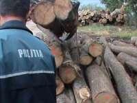 Maramureșean prins în flagrant de poliţişti în timp ce tăia ilegal arbori