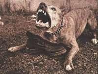 Maramureșeancă atacată de un pitbull. Femeia a ajuns în stare gravă la spital