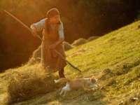 Maramureşenii din mediul rural muncesc prea mult şi nu se alimentează corespunzător