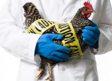 Măsuri de prevenţie în influenţa aviară