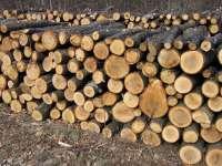Material lemnos confiscat de la un depozit de polițiștii din Vișeu de Sus