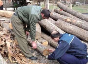 Material lemnos confiscat de poliţişti la Săpânţa