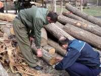 Material lemnos în valoare de 63000 de lei confiscat la Leordina