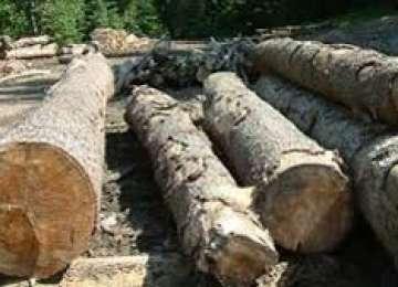 Material lemnos în valoare de 7000 de lei confiscat la Leordina