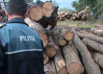 Material lemnos în valoare de peste  5.000 de lei confiscat de polițiștii maramureșeni