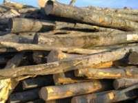 Material lemnos transportat fără documente legale confiscat de poliţişti