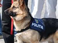 MEBAN, câinele de urmă a prins un infractor periculos