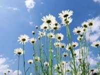 METEO: Aflaţi ce temperaturi sunt prognozate în Maramureş, pentru următoarele două săptămâni