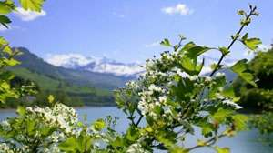 METEO: Aflați cum va fi vremea în Maramureș de Florii și de Paște