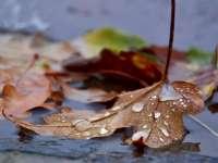 METEO - Cum va fi vremea în Maramureş joi, 26 octombrie