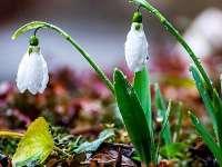 METEO - Cum va fi vremea în Maramureş vineri, 3 martie