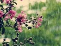 METEO: Răcire a vremii și ploi moderate cantitativ, de duminică după-amiază până marți seară
