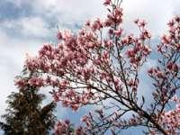 METEO: Temperaturi de până la 20 de grade în Maramureș, în urmăroarele două săptămâni