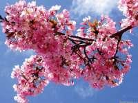 METEO: Temperaturi maxime între 14 și 24 de grade de Paște
