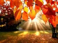 METEO - Vezi cum va fi vremea în septembrie, octombrie şi noiembrie, în Maramureş