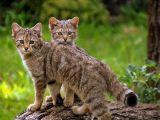 Ministerul Mediului dă ordin pentru împușcarea a peste 1.600 de animale protejate