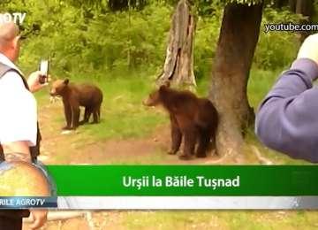 Ministrul Mediului a aprobat uciderea urșilor din zona Băile Tușnad