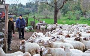 Moarte suspectă în Săpânţa. Un cioban de 68 ani a fost găsit mort