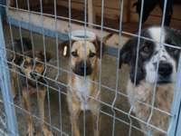 Municipiul Baia Mare spune NU masacrului câinilor fără stăpân