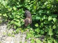 NEPĂSARE - Doi puiuți de pisică, abandonați într-o cârpă murdară lângă fosta Moară de grâu