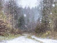 NINGE viscolit în MARAMUREŞ iar stratul de zăpadă a ajuns la 3 centimetri
