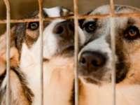 Câinii fără stăpân NU MAI POT FI EUTANASIAȚI: Normele de aplicare a legii în cauză, suspendate de către Curtea de Apel București