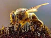 O albină a provocat întârzierea decolării unui avion în Indonezia