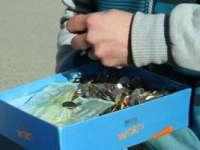 O farmacistă şi-a achitat rata unui credit în franci elvețieni cu șapte kilograme de monede