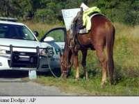 O femeie a fost arestată pentru conducerea în stare de ebrietate... a unui cal