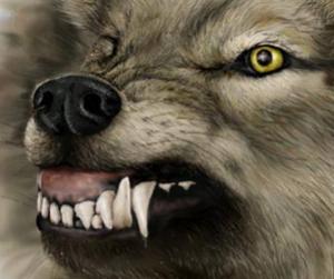O femeie din Argeş a fost muşcată de lup în propria gospodărie
