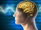 Oamenii de ştiinţă au descoperit procesul neuronal de formare a amintirilor