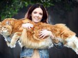 Omar este probabil cea mai lunga pisica din lume