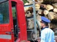 Operaţiunile cu material lemnos – verificate de poliţişti