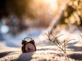 Ora de iarnă. Ceasurile se dau înapoi cu o oră peste o săptămână