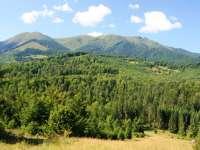 Pădurile de fag din Groșii Țibleșului și Strâmbu Băiuț incluse oficial în Patrimoniul Mondial UNESCO