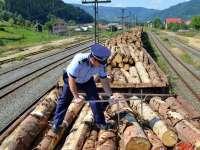 Pădurile Maramureșului, furate la greu. Poliția amendează, hoții fură lemnul în continuare