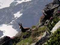 Panouri informative dedicate observării caprelor negre în Munţii Rodnei