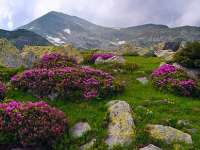 Parcul Național Munții Rodnei a fost desemnat Rezervaţie a Biosferei de către UNESCO