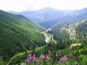 """Parcul Natural Munţii Maramureşului, în topul mondial al zonelor """"de neînlocuit"""""""