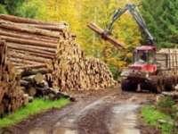 PERCHEZIȚII – Mascații au descins la firme de exploatare a lemnului din Sighet, Baia Mare și Vișeu de Sus