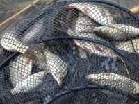 Pescuit ilegal pe râul Someş